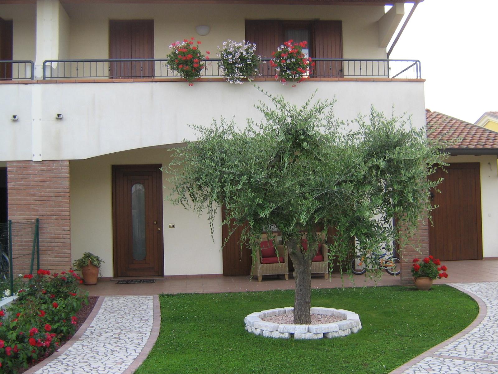 Composizione olivo secolare - Giardini di villette ...