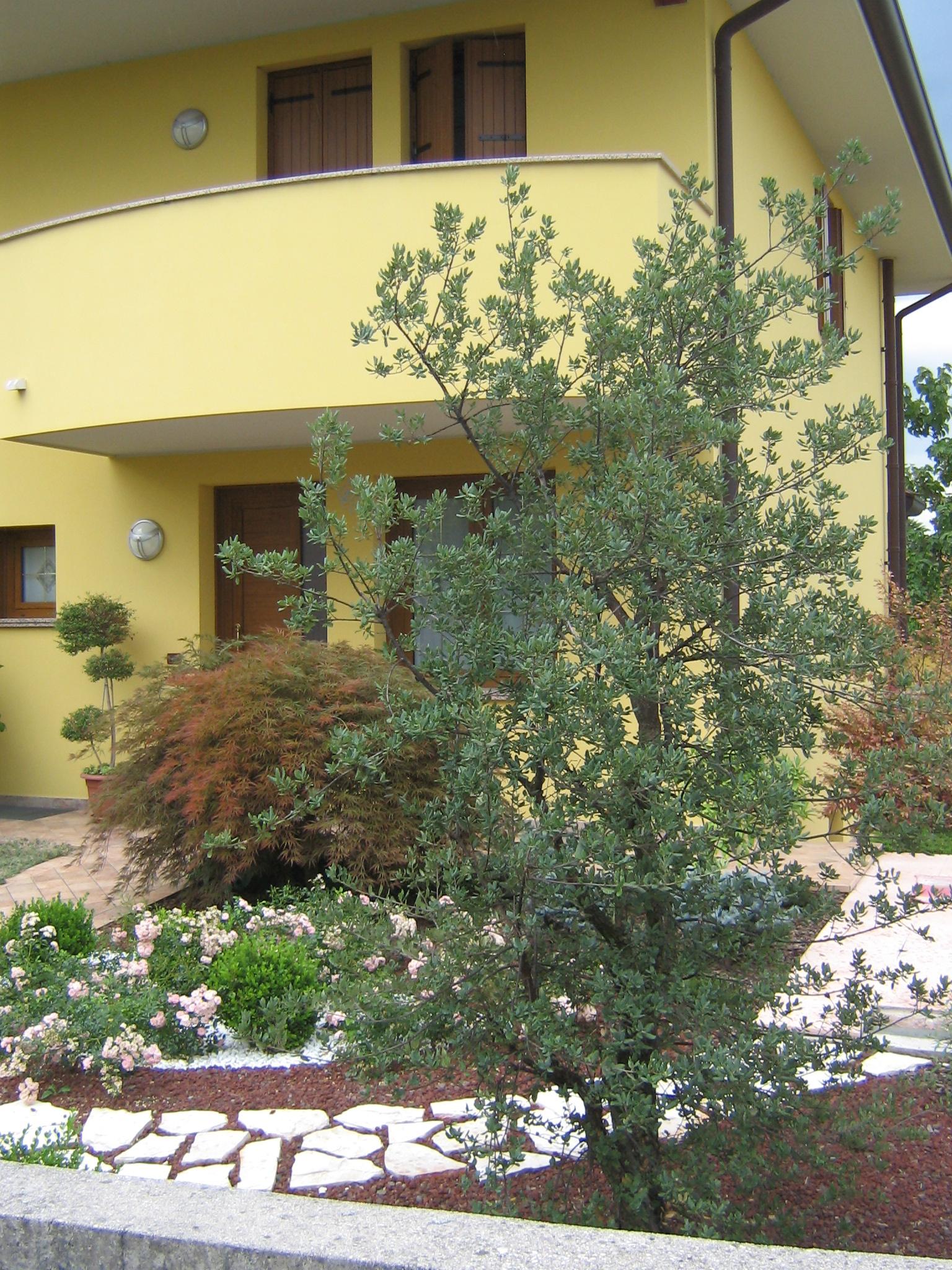 giardini idee pratiche manutenzione : giardino a bassa manutenzione